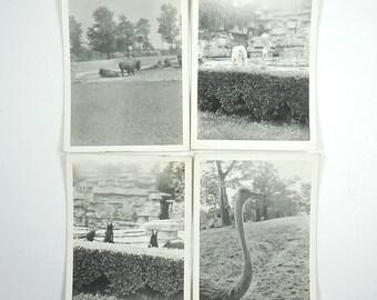 1930's Snapshots Animals at the Detroit Zoo