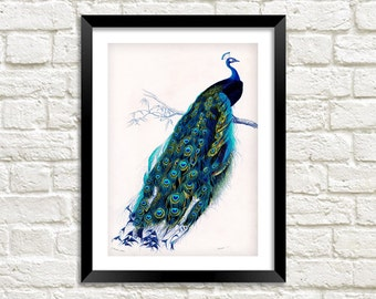 BLUE PEACOCK PRINT: Vintage Bird Art Illustration Wall Hanging (A4 / A3 Size)