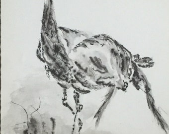 Ostrich Watercolor