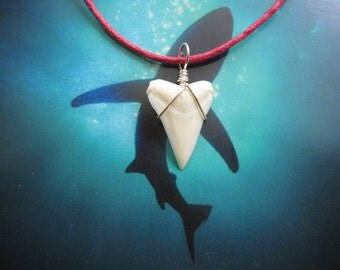 Shark Tooth Necklace, Modern Day White Shark tooth, Silver plated wire, Hot Pink cord