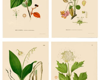 Botanical Antique Wild Flower Prints. Set of 4 Individual White Countryside Plants C1920 Ideal Gardening Gift Countryside flower Prints.