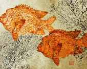 Garibaldi (from Mexican waters) Gyotaku print - traditional Japanese fish art - by dowaito