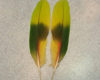 "Matched Pair Amazon Parrot 5"" Tail Feathers AM7"