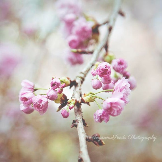 Spring photograph, Pink flowers photo, Cherry Blossoms image, sakura, floral, flora, square picture, botanical wall art, gift,