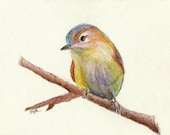 """Watercolor pencil drawing, """"Tiny Bird #1"""", matted, backed, ready for framing"""
