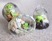Terrarium Wedding Custom Blown Glass wedding favors Succulents SALE