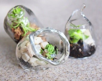 60 Miniature terrariums Blown Glass wedding favors Succulents