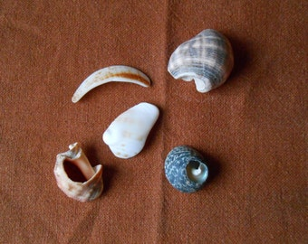 Shell fragments, craft supply, 5 pieces, jewelry supplies, crafting, DIY projects, surf tumbled shell fragments C20