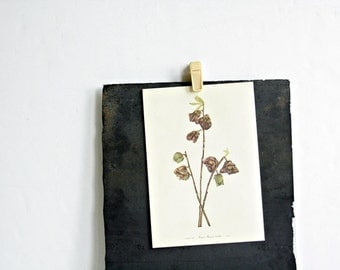 Vintage 1950's Botanical Bookplate - Tulip Tree + Papaw Flower - Spring Home Decor, Gifts for Her, Mothers Day, Summer Boho, Trees + Flowers