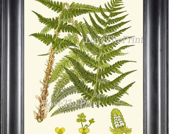 Botanical Green Fern Art Print 7 Antique Beautiful Green Ferns Forest Nature Natural Science to Frame Bedroom Living Dining Room Wall Decor
