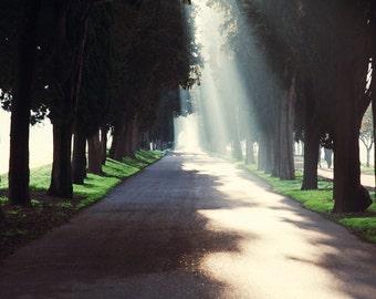 Italy Photography, Rome Italy Photo, Travel Photography, Green, Fine Art Print, Fine Art Photography, Sunlight Through Trees