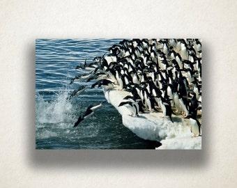 Penguins on Iceberg Canvas Art, Penguins Wall Art, Ocean Canvas Print, Nature Artwork, Photograph, Canvas Print, Home Art, Wall Art Canvas