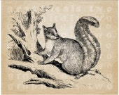 Squirrel in tree Instant digital download graphic image transfer for iron on fabric burlap decoupage paper pillow card tote No gt222