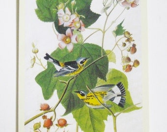 Audubon Vintage Bird Image Magnolia Warbler Destash Craft Supply Decoupage Paper Ephemera Scrapbook Card Making Supply Bird Images