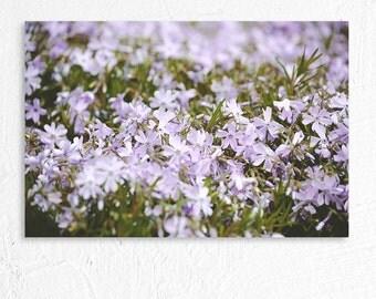 Dreamy Little Purple Flowers Fine Art Photo Print
