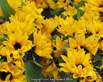 Sunflowers Fine Art Photography