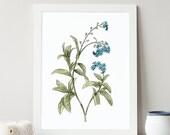 Forget-Me-Not Print, Plant Illustration, Botanical Art, Flower Decor, Watercolor Print, Kitchen Decor, Hand Painted, Giclee Print, Fine Art