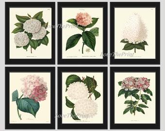 BOTANICAL Print SET of 6 Art  Antique Beautiful Hydrangea Flowers Plants White Pink Spring Summer Garden Nature Vintage Wall Home Decor