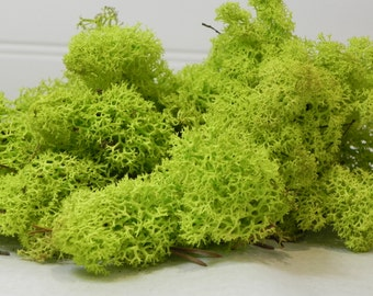 Reindeer Moss Preserved Lime Green (1 OUNCE) for fairy garden,miniature garden, terrarium, air plants, chartreuse green terrarium soft moss