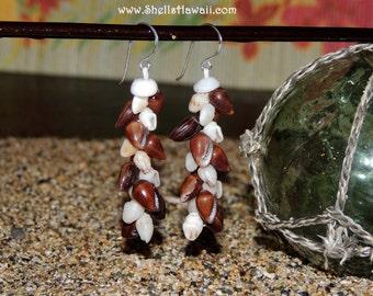 """1 1/2"""" Niihau Poleho & Momi shell earrings"""