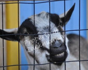 The Happy Goat Picture
