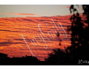 Pink Sky Photograph