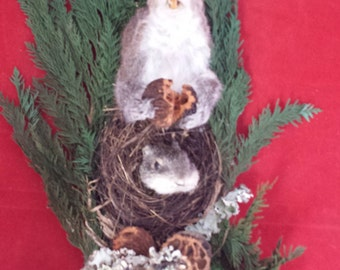 Taxidermy Squirrel Shoulder Mount, wall hanging display