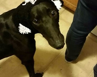 Skunk Greyhound Snood