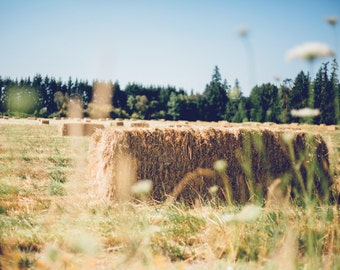 Golden Days, Rustic Country Decor, Landscape Photography, Hay Picture, Hay Bales, Oregon, Farmhouse Decor