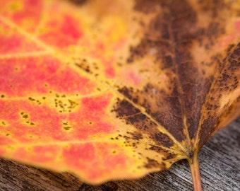 Autumn Leaves - Photography Print