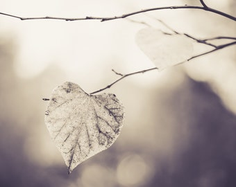 "Black and White Photography, Leaf Print, Heart Leaf, Fall Art, Autumn Decor, Leaf Art, Tree Wall Decor, Heart Art, Nature Print ""Heart You"""