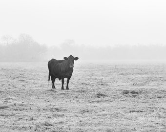 Black Cow White World Fine Art Photography Texas Landscape black and white large wall art cattle cow art angus minimal art Foggy field West