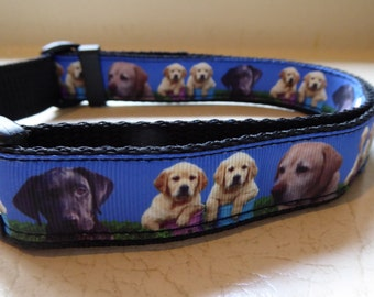 Labrador dog collars hand made in New Zealand.
