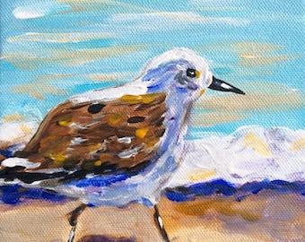 Little Shore Bird