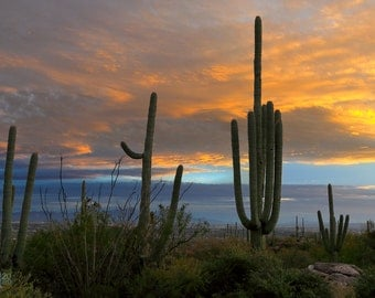 Sunset in the Catalina Mountains with Saguaro Cactus Photograph - Sonoran Desert in Tucson, Arizona
