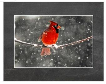 Snowy Cardinal Print