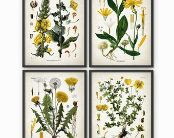 Yellow Flowers Print Set Of 4 - Vintage Yellow Flower Art - Floral Yellow Decor - Yellow Flower Botanical Art - Yellow Nursery Decor AB519
