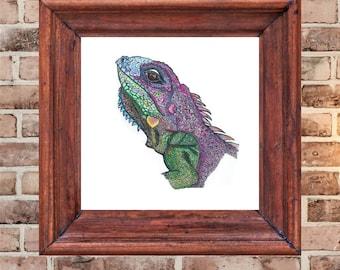 purple iguana