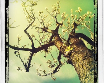 Nature Photography, Wall Decor, Home Decor Photography, Spring Bloom, Tree, Fine Art Photography, 'The Magical Tree'