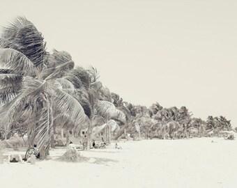 Palm Trees beach Photography fine art black and white sepia home decor