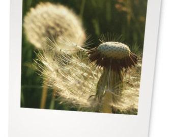 Dandelion Photography  |  Note Cards  |  Dandelion Zombies  |  Set of 5 Designs w/Envelopes