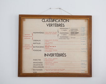 Large Vintage double-sided French school poster - Vertébrés and Invertébrés
