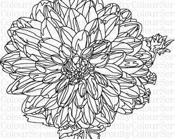 adult coloring page large flower printable 17
