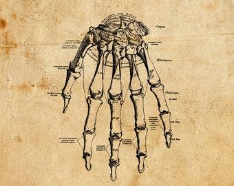 Vintage Hand. Vector, PNG, JPEG. Digital download. Art, print, t-shirts, merchandise. Bones, skeleton, illustration, diagram, medical.