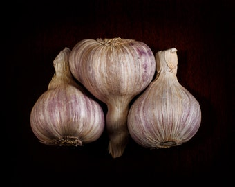 "Fine Art Photography Print- ""Purple Garlic"""