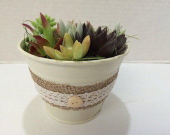 Medium Succulent Arrangement in an Antique White Pail Planter. Beautiful, completely assembled dish garden.