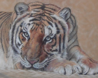 Beauty is a Beast - Limited Edition Mounted A3 print of beautiful Tiger