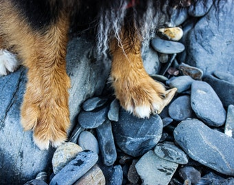 Puppy paws on the beach photography (poster)