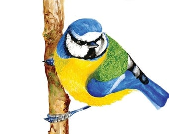 A LIMITED Edition Giclee Print of 'Tit' the Blue Tit
