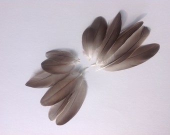 Feathers for insects - crafting feathers - feathers for moths - DIY feathers feather wings -15121